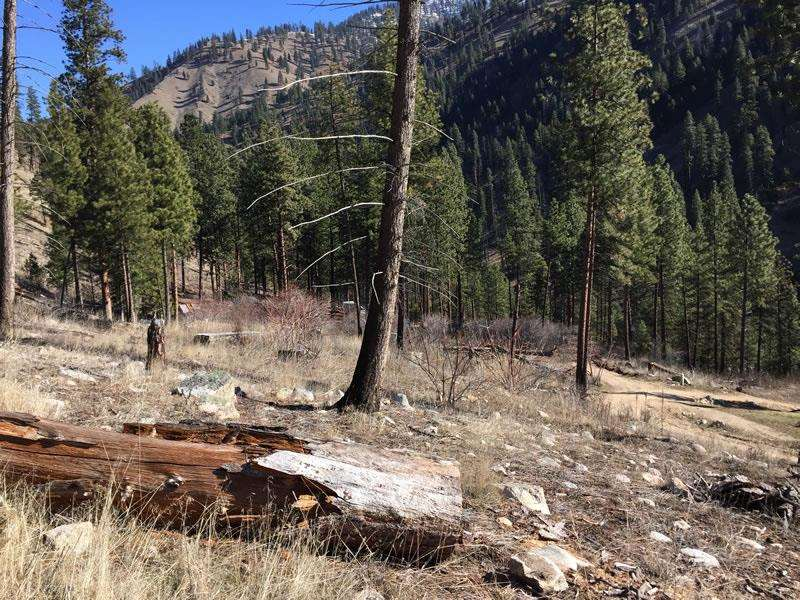 Recreational Property for Sale at TBD Smead Lane TBD Smead Lane Warren, Idaho 83671