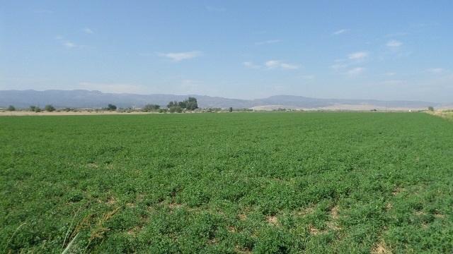 Farm / Ranch for Sale at 8185 Jay Bird Lane Marsing, Idaho 83639