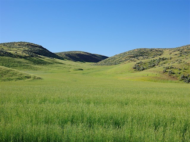 TBD Cove Road, Weiser, ID 83672