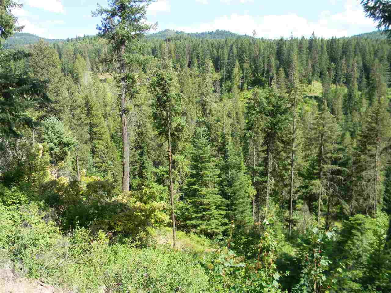 Additional photo for property listing at 1 Red Fir Road  Kooskia, Idaho 83539