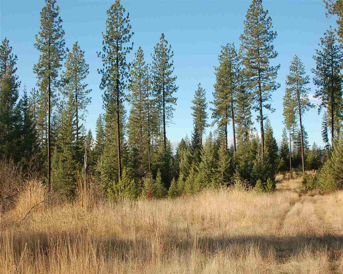 Land for Sale at Tbd Highway 9 Harvard, Idaho 83834