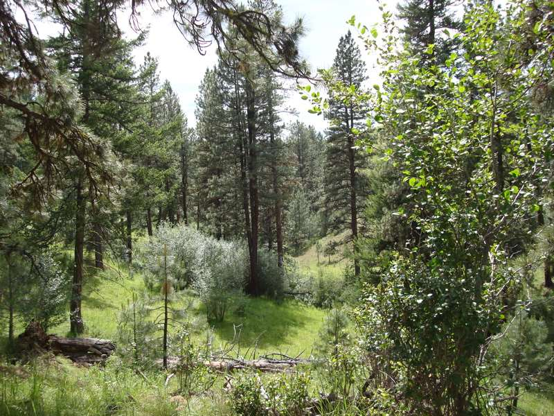 Land for Sale at 0 Forest Service Road #263 Riggins, Idaho 83549