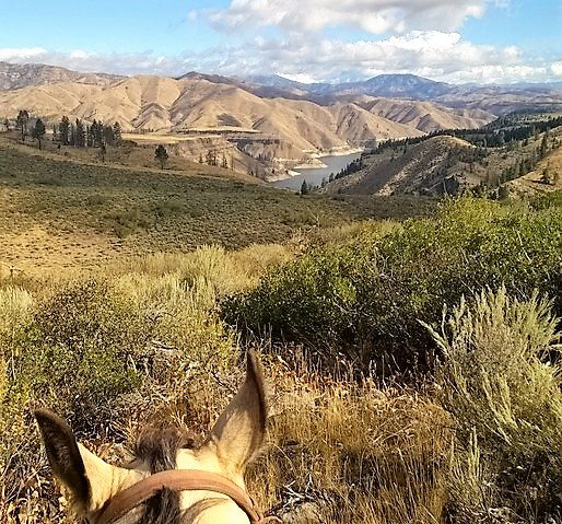 Land for Sale at Tbd Lester Creek Road Pine, Idaho 83647