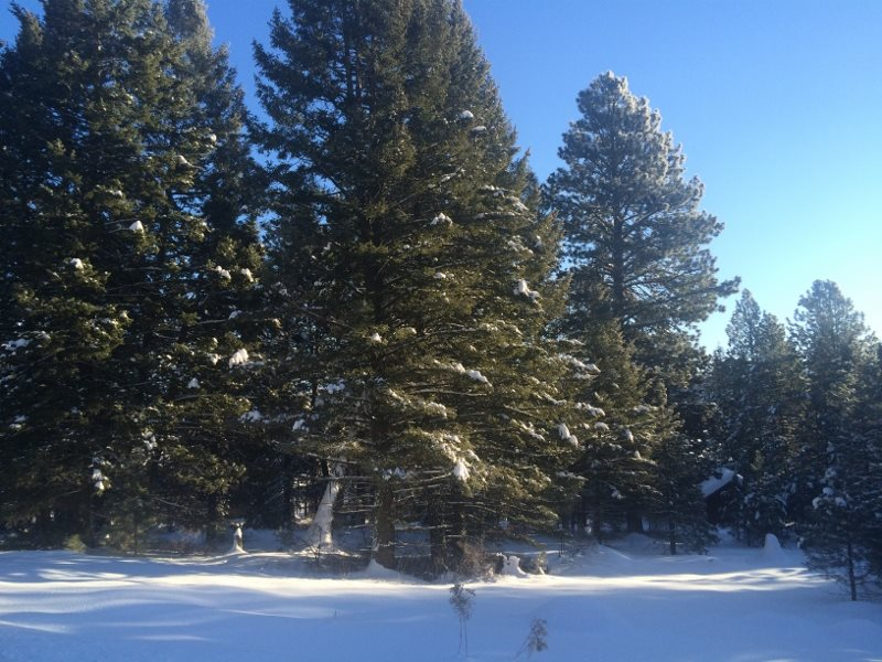 Recreational Property for Sale at 490 W Mountain Road 490 W Mountain Road Cascade, Idaho 83611