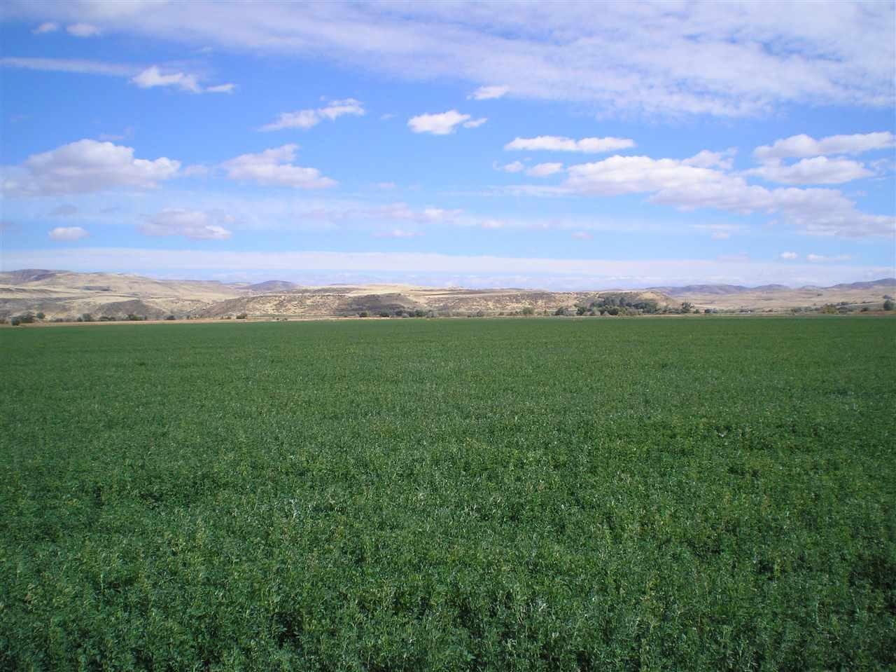 2061 Weiser River Road,Weiser,Idaho 83672,Farm & Ranch,2061 Weiser River Road,98649536