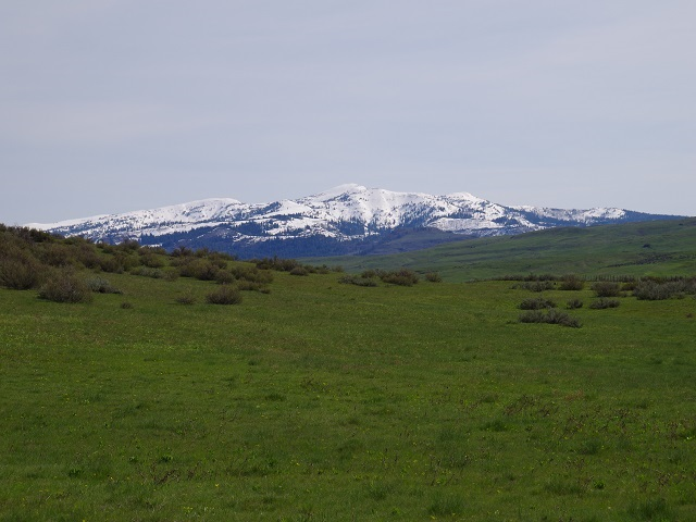 Agricultural Land for Sale at TBD Whiteman Lane TBD Whiteman Lane Indian Valley, Idaho 83632