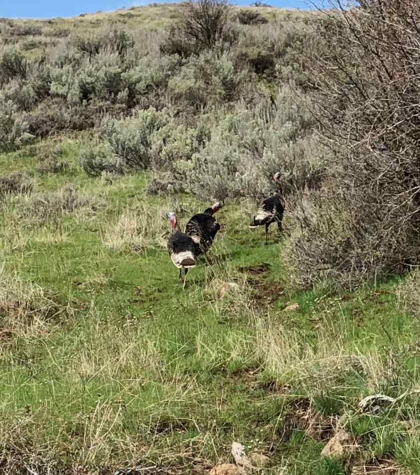 Agricultural Land for Sale at 2 Cow Creek Road 2 Cow Creek Road Cambridge, Idaho 83610