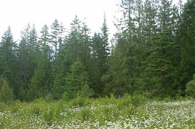 Lot 28 Red Willow Road, Outside City Limits, ID 83537