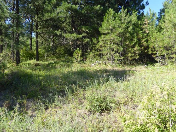 Land for Sale at Tbd Snowberry Lane Lot 11 Plummer, Idaho 83851