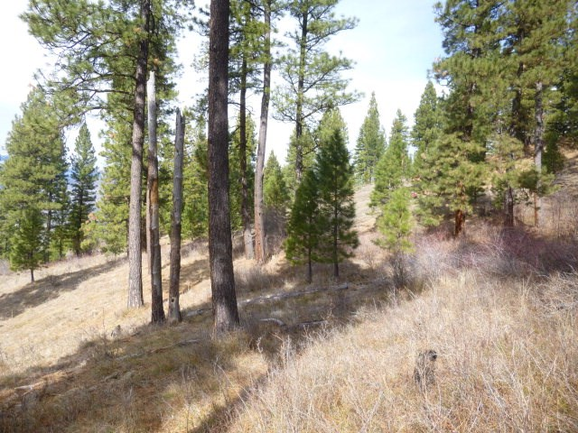 Land for Sale at C Denny Creek Rd Pollock, Idaho 83547
