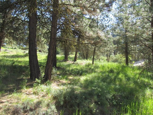 Recreational Property for Sale at 9 Laguna Place 9 Laguna Place Cascade, Idaho 83611