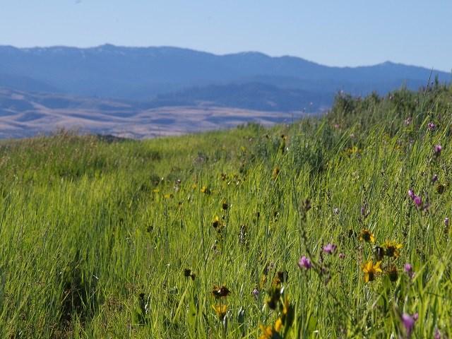 Agricultural Land por un Venta en TBD Bedrock Flat Road TBD Bedrock Flat Road Midvale, Idaho 83632