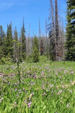 Casas de retiro por un Venta en Survey 2510 Mineral Hill Mining District Survey 2510 Mineral Hill Mining District Salmon, Idaho 83467