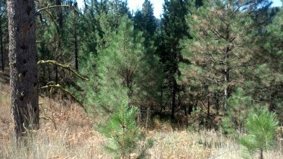 Recreational Property for Sale at 9636 Packer John Road 9636 Packer John Road Cascade, Idaho 83611