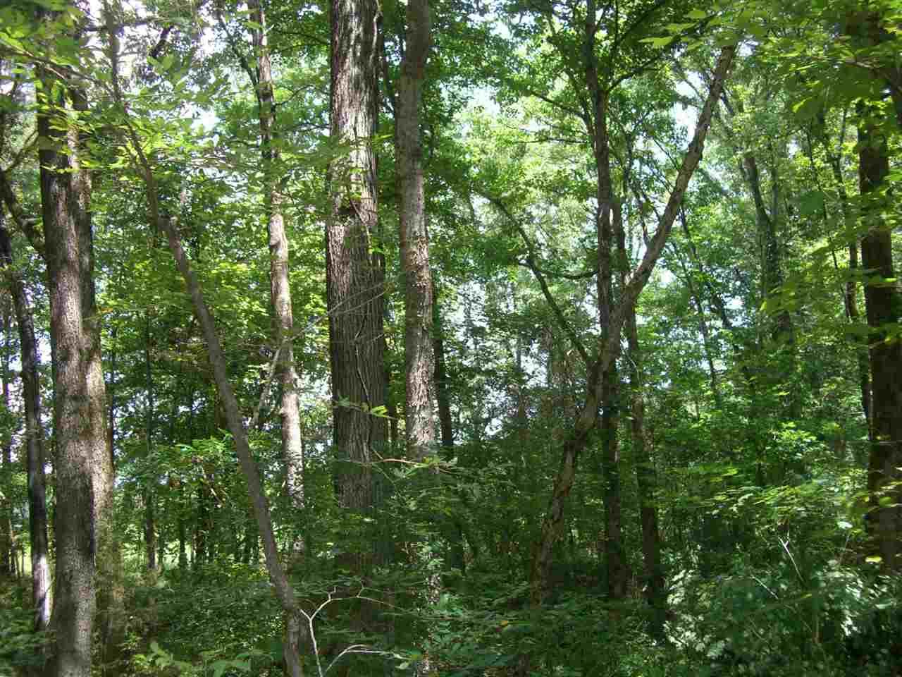 104 Tupelo Pike, Scottsboro, AL 35768