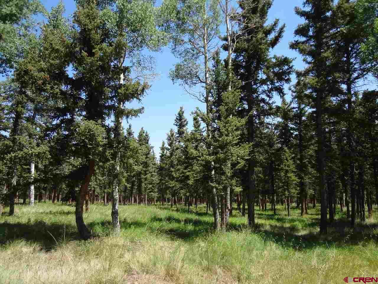 4030 Blue Mesa Drive, Powderhorn, CO 81243
