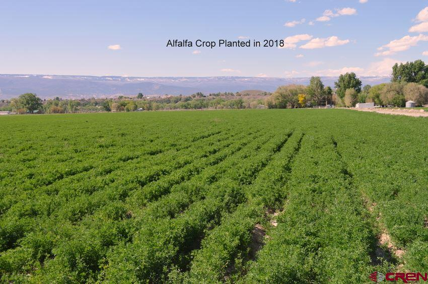 """Residential, Agricultural or Investment: Whether its for your new mini-ranch residence or you want to develop you need to see this property. Currently 18.5 acres just planted last year in alfalfa, located in an area that many new high end homes are being built & all utilities are available including natural gas. The property is irrigated with Relief Ditch water, a senior water right out of the Gunnison River that starts early and runs late. Newly installed take out off the Relief Ditch dedicated to this property with newly installed delivery system including underground delivery from the take out to alfalfa valves that deliver by 12"""" gated pipes to the well marked fields. Tri-County water is available in whatever amount desired on the opposite side of 2075 Road, Natural gas & electricity  on the property, and views of the West Elks make it a very desirable building site for the owner, or a developer. Two homes are being built on the adjoining parcels that are in the $400,000+ category."""