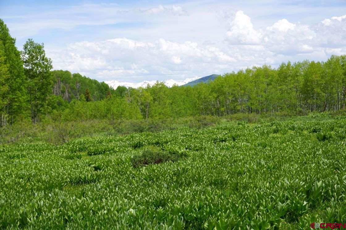A rare opportunity to own 40 acres of a 160-acre inholding surrounded by Gunnison National Forest. Beautiful meadows, gently sloping terrain, large aspen groves and mountain views. Excellent mountain hunting and recreational retreat. Easy access off Stevens Gulch Road and private easement for ingress/egress. Close to Paonia, walking distance to Hubbard Creek and just minutes from Electric Mountain Lodge. Take a look at this special high country getaway!