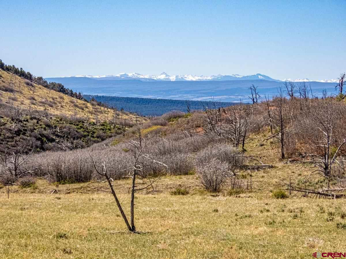 This off-grid property consists of 181 total acres that borders BLM. The property lies north of Cedaredge, CO in the Currant Creek drainage above Cactus Park. The entire property is fenced and locked gates ensure privacy. The Grand Mesa National Forest connects to the BLM, but no public access exists from the access road. The improvements consist of a camper inside of a wood framed enclosure, an outhouse and tool shed. The camper is fed with solar electricity and a cistern provides water. Numerous elk, deer, black bear and other wildlife frequent this property and the surrounding area.