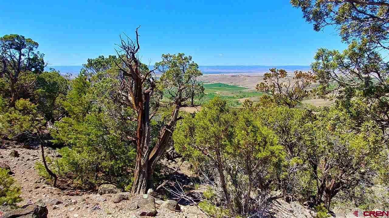 PHASE 3 LOTS NOW OPEN FOR SALE!!  6 new Lots in Phase 3 are now available for conditional sale upon final County sign-off (happening soon).  Absolutely BEAUTIFUL panoramic views!!  Each of these spacious Premium Home Sites has fabulous 360º views of the Grand Mesa, West Elk Mountains, Gunnison River Basin, San Juan Mountain Range, Uncompahgre Plateau, and the Surface Creek Valley.  Enjoy quiet seclusion and sage and cedar breezes while you watch the wildlife play---all within a few minutes from downtown Cedaredge in the gorgeous Surface Creek Valley of Western Colorado!  Electricity service is provided to each of the Lot boundaries.  Choose your Lot now in this newer subdivision where Energy Efficiency and Eco-Friendly building is encouraged.  A Common Open Space along the ridge is also available for all Lots to enjoy the outdoors and quiet nature walks!  Phase 1 and Phase 2 roads are paved, with newer Phase 3 roads to be paved when Lots are sold.    Use the seller's home plans or yours to build the perfect home to suit your needs! Property values protected by moderate covenants.   Cedaredge has excellent schools, a variety of restaurants, medical offices, and is home to an 18-hole public golf course and a thriving cultural arts community. The Grand Mesa is just minutes up the highway and offers all kinds of year-round mountain recreation & Powderhorn Ski Resort on the World's largest flat-top mountain!  These Lots are the perfect place for your next home or property investment.  See also the Aerial Videos online (or request the links!)