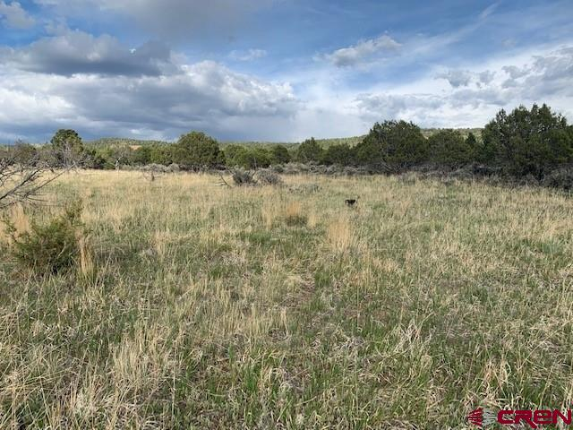 Beautiful 13.26 acre lot in desirable north Cedaredge location. Come build your dream home with views of the largest flat top mountain in the U.S., the Grand Mesa which boasts over 300 lakes and reservoirs and year round recreation. Property includes some irrigation, contact agent for information regarding the irrigation.