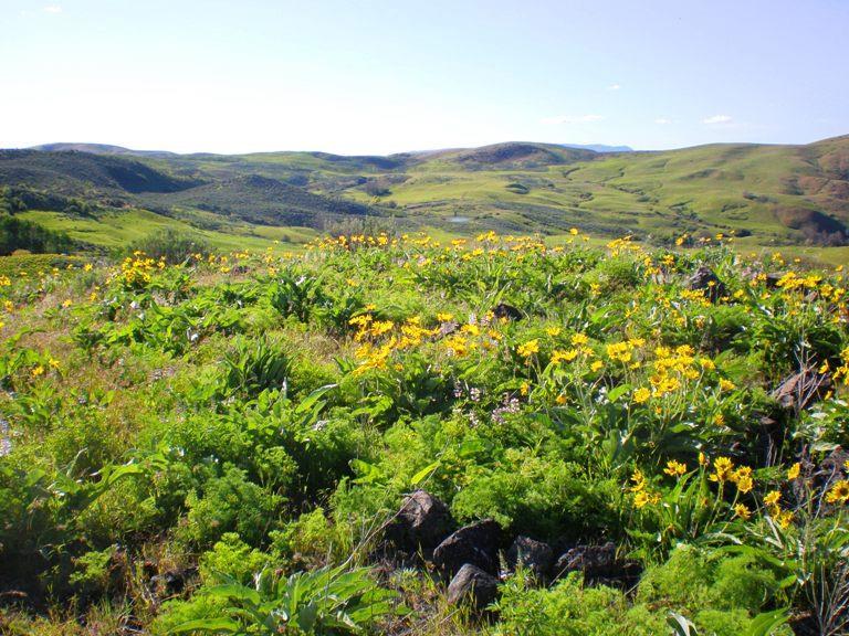 TBD Summit Ridge Rd,Horseshoe Bend,Idaho 83629,Land,TBD Summit Ridge Rd,98688438