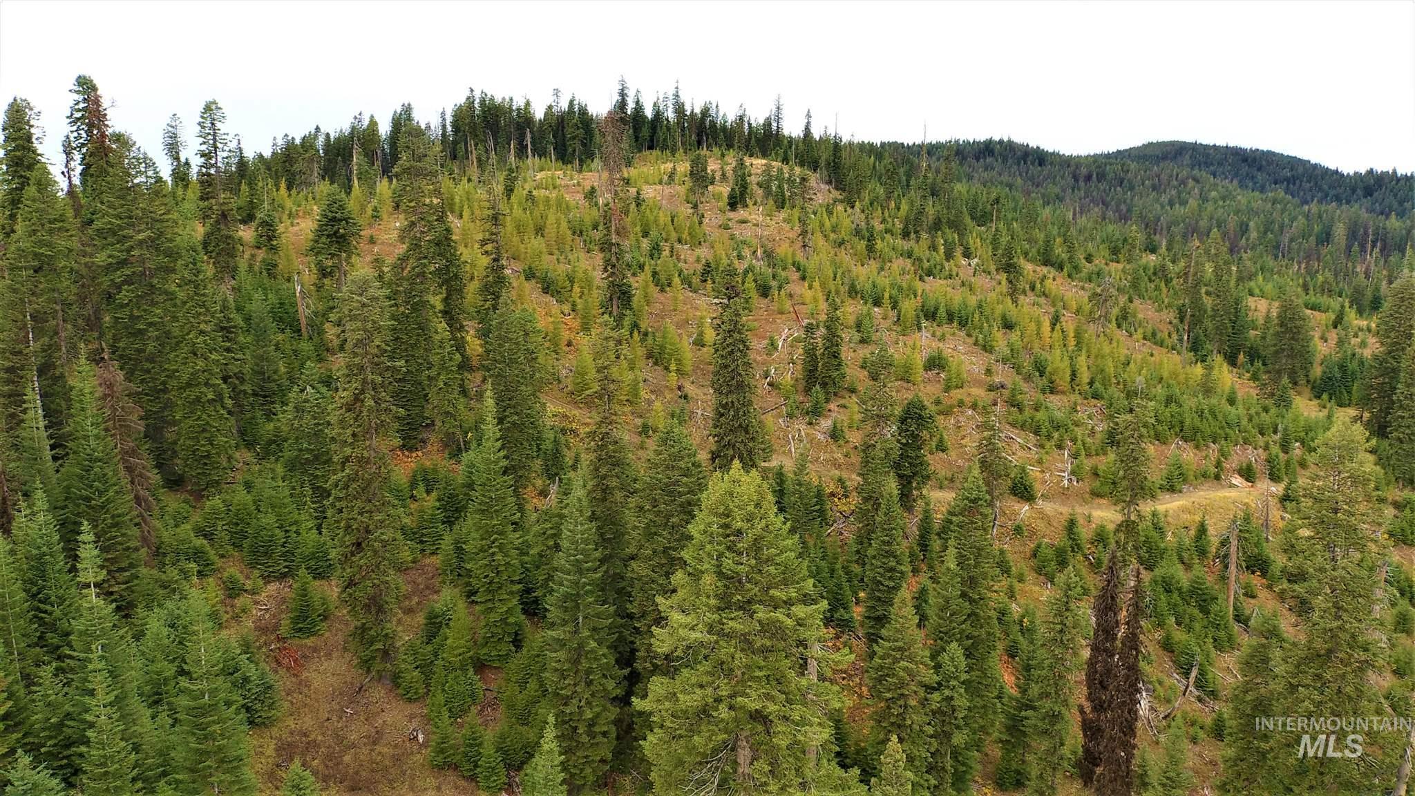 TBD Elk Summit Properties Parcel 5, Elk City, ID 83525