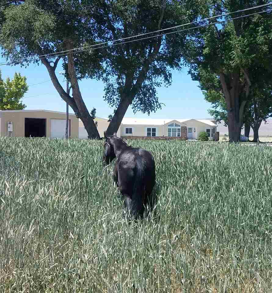 Farm / Ranch / Plantation for Active at 495 N Meridian Road Lovelock, Nevada 89445 United States